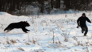Bear_Attack